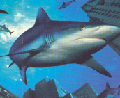 Before your dropped call attracts competitors inspect our shark repellent.